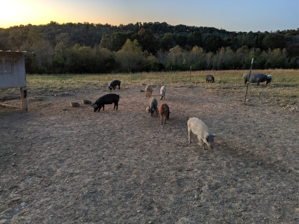 Pasture Point Pork is one of our favorite Eastern Kentucky Harvest Hosts locations.