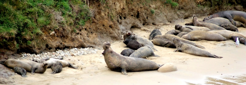 There are tons of wildlife viewing opportunities in Point Reyes National Seashore.