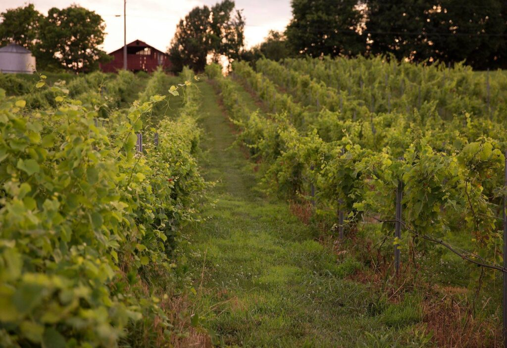 Bluegrass Vineyard is one of our awesome locations in Western Kentucky.