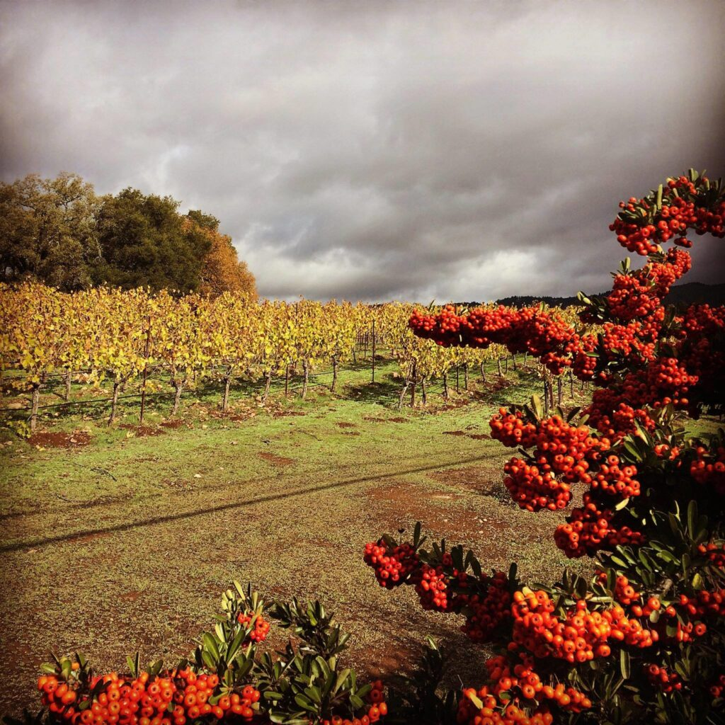 Mayo Family Winery is one of our excellent Harvest Hosts locations near Point Reyes National Seashore.