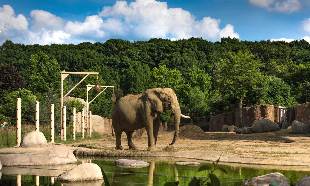 Cleveland Metroparks Zoo is an awesome tourist location in the Cleveland metro area.