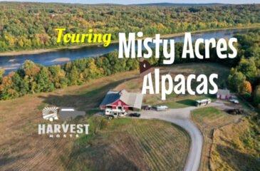 Touring Misty Acres Alpaca Farm