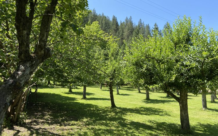 Big Canyon Acres is a stunning Harvest Hosts location on the Idaho Panhandle.