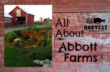 All About Abbott Farms