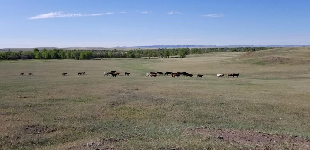 J Walker Land & Livestock is an awesome Harvest Hosts location in Northern Wyoming.