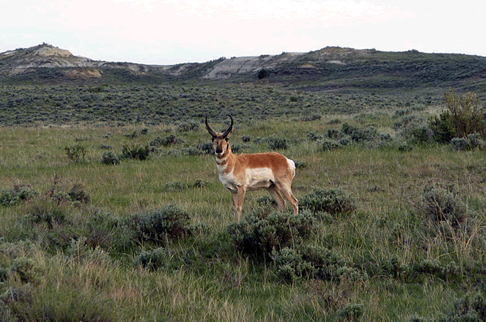 Thunder Basin National Grassland is an incredible place in Northern Wyoming.