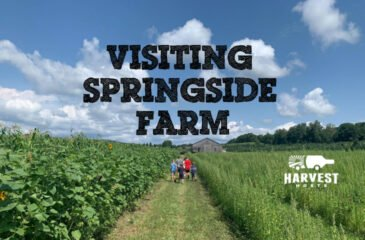 Visiting Springside Farm