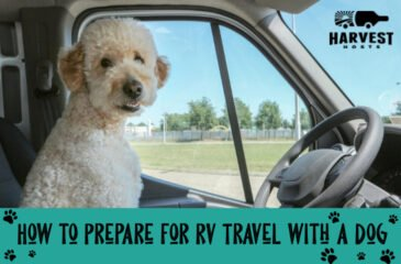 How to Prepare for RV Travel with a Dog